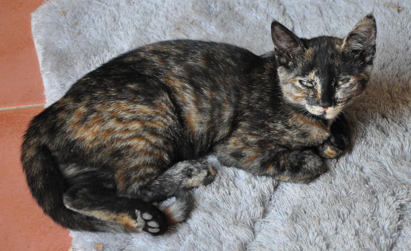 Psyco kitten